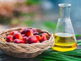 palm oil truth